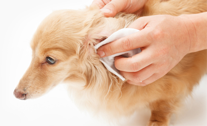 Ear Cleaning at Preppy Pet West Houston