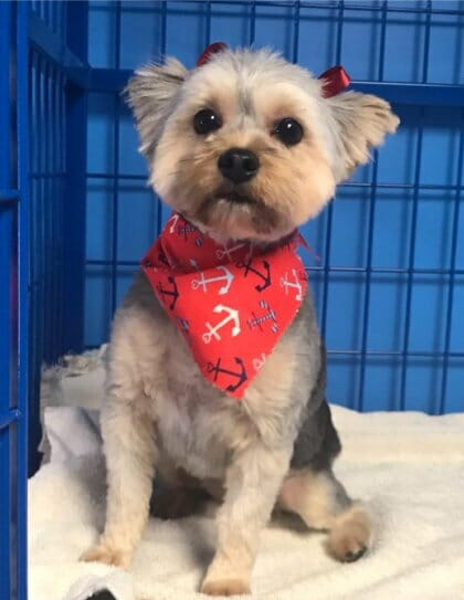 Dog Grooming at Preppy Pet West Houston