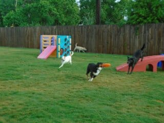Preppy Pet West Houston dogs having fun outside