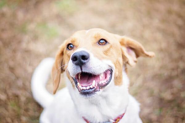 Preppy Pet West Houston Dog Boarding