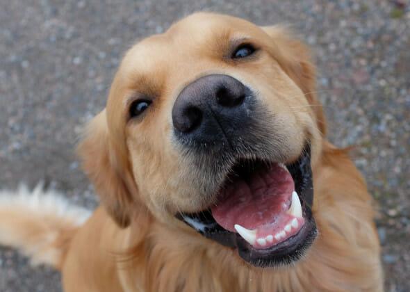 Happy, smiling dog at Preppy Pet West Houston