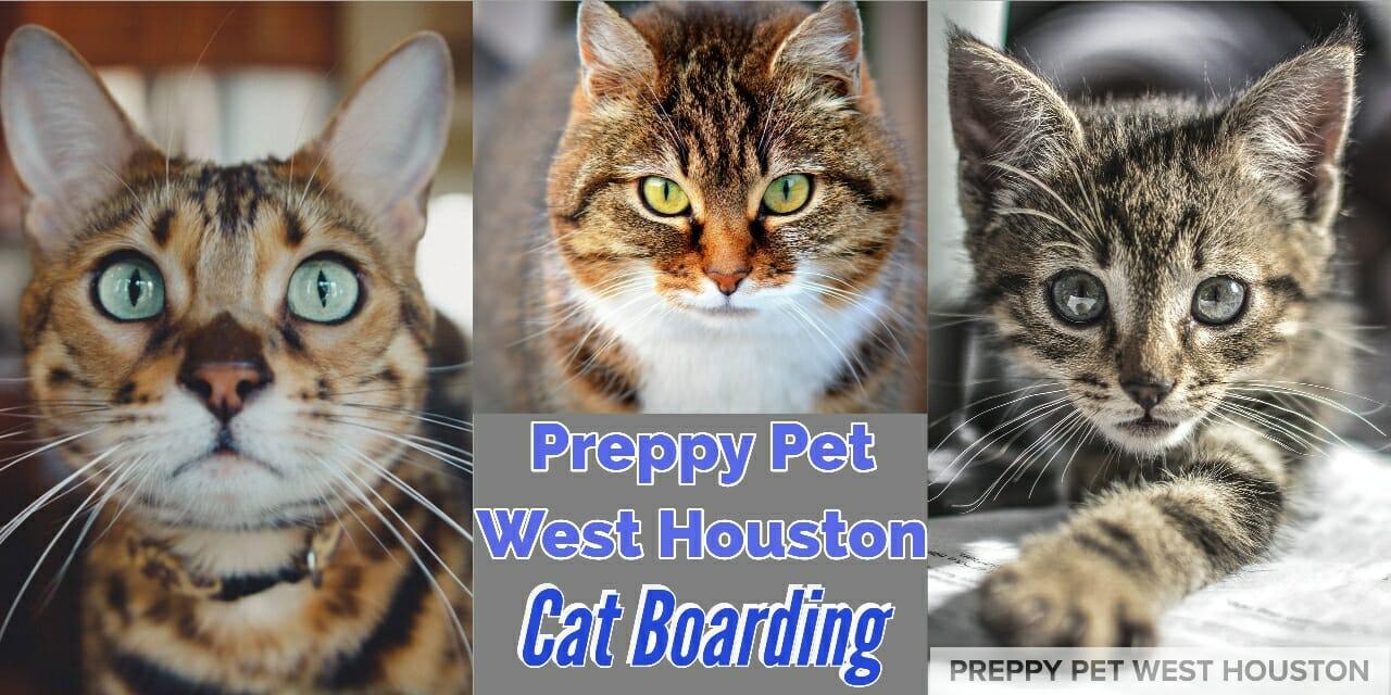 Preppy Pet West Houston cat boarding services in Houston, TX