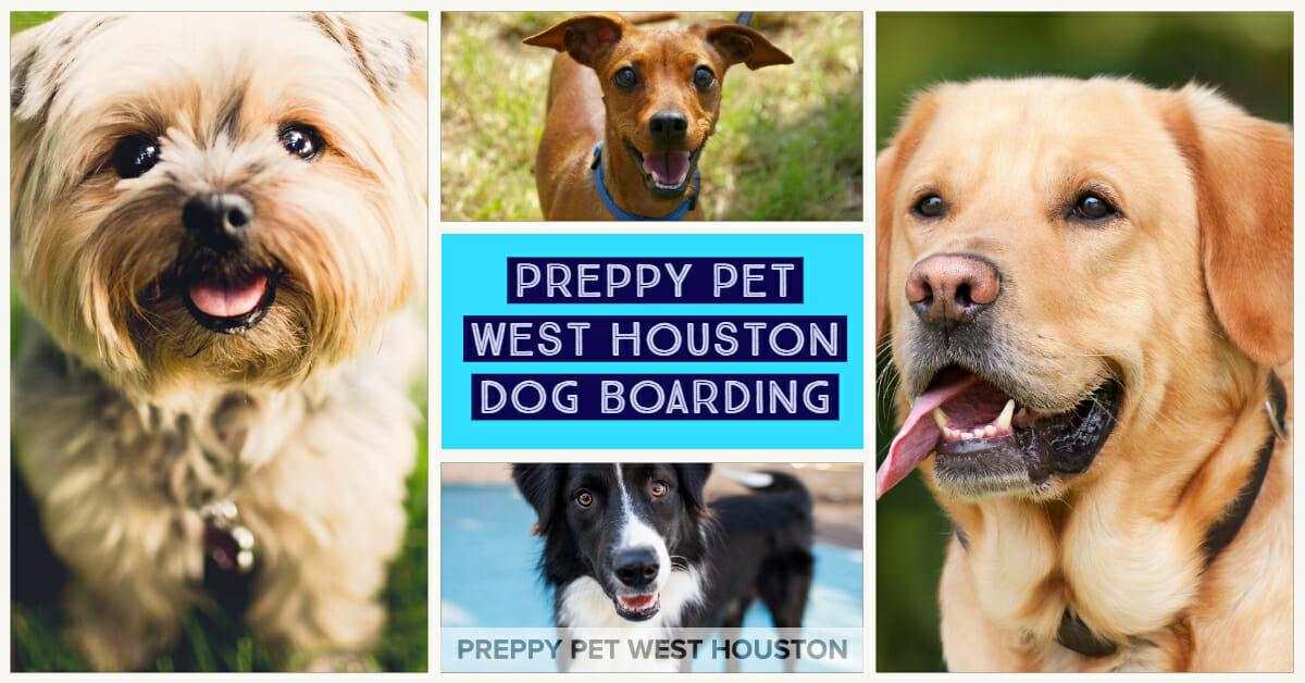 Dog Boarding in Houston, TX