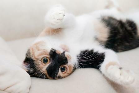 Preppy Pet West Houston Cat Boarding