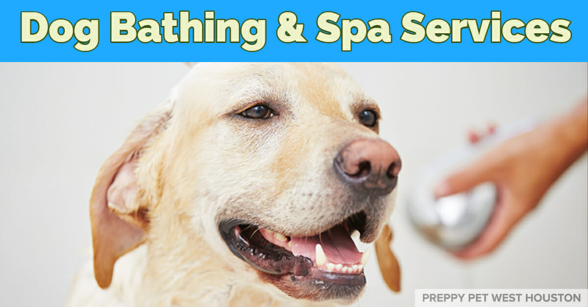 Dog Bathing Services in Houston, TX