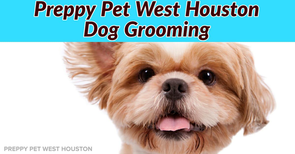 Dog Grooming in Houston, TX