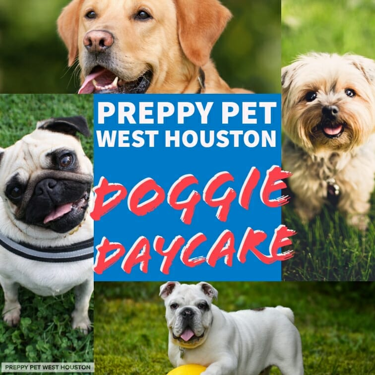 Preppy Pet West Houston Dog Daycare