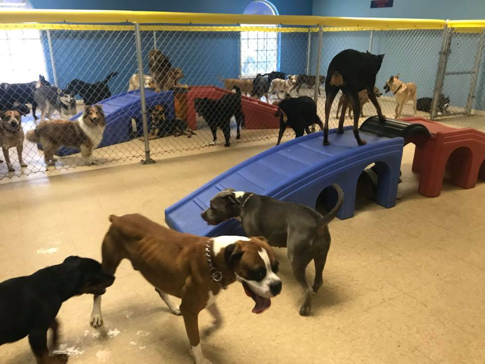 Dogs playing at Preppy Pet West Houston