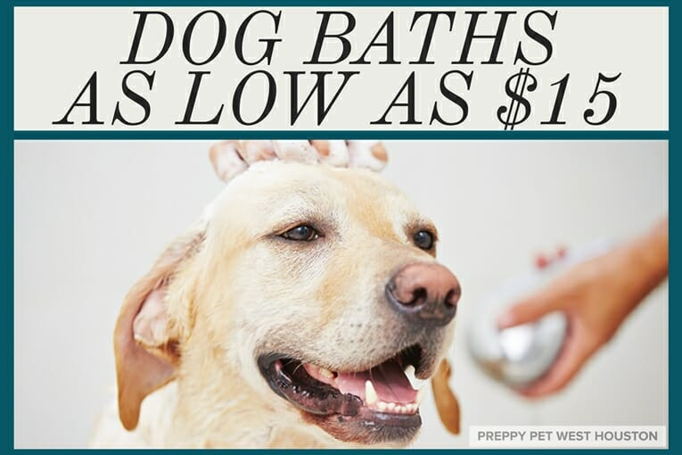 Preppy Pet West Houston Dog Baths