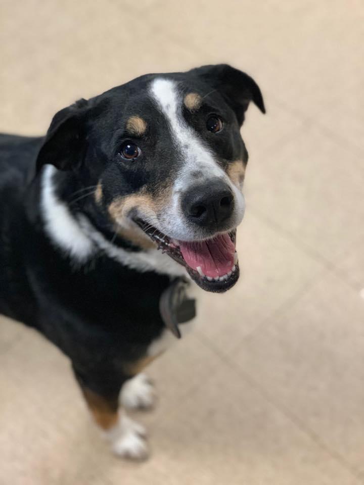 Preppy Pet West Houston | Doggie Daycare