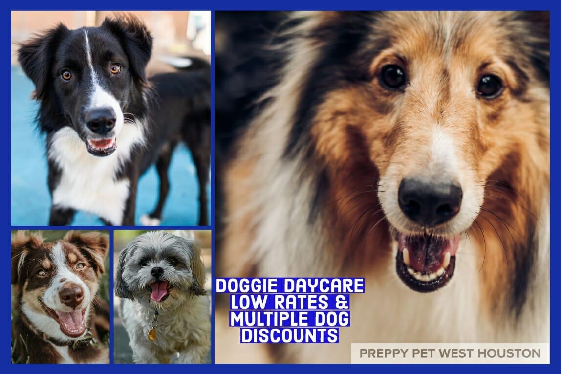 Doggie Daycare Houston, TX