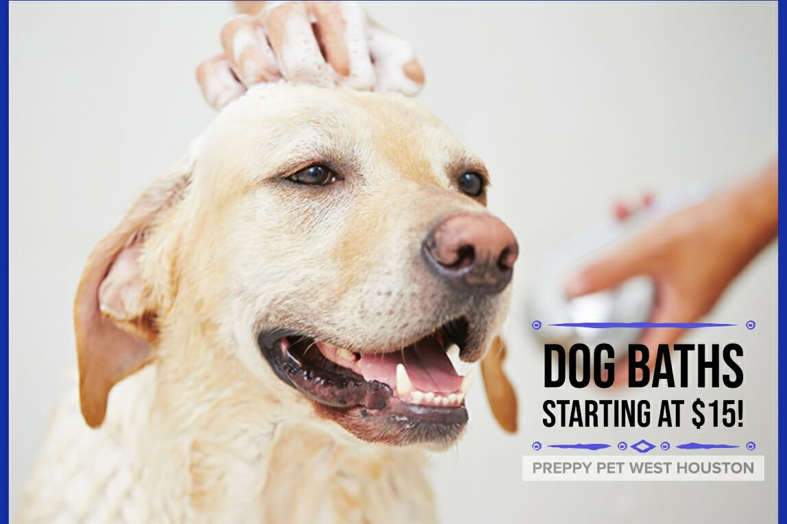 Preppy Pet West Houston | Dog Baths Prices