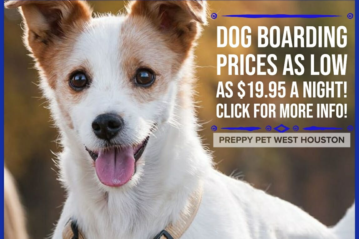 Preppy Pet West Houston Dog Boarding Prices