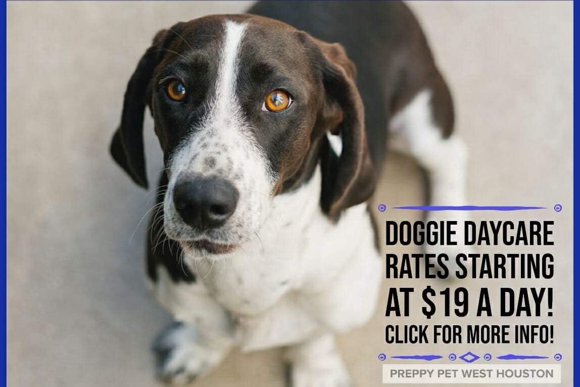 Preppy Pet West Houston Dog Daycare Prices