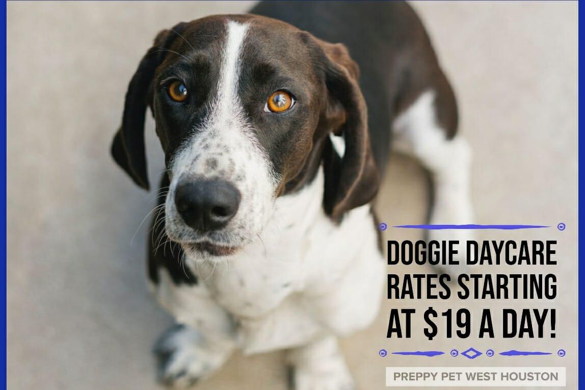 Preppy Pet West Houston | Dog Daycare Rates