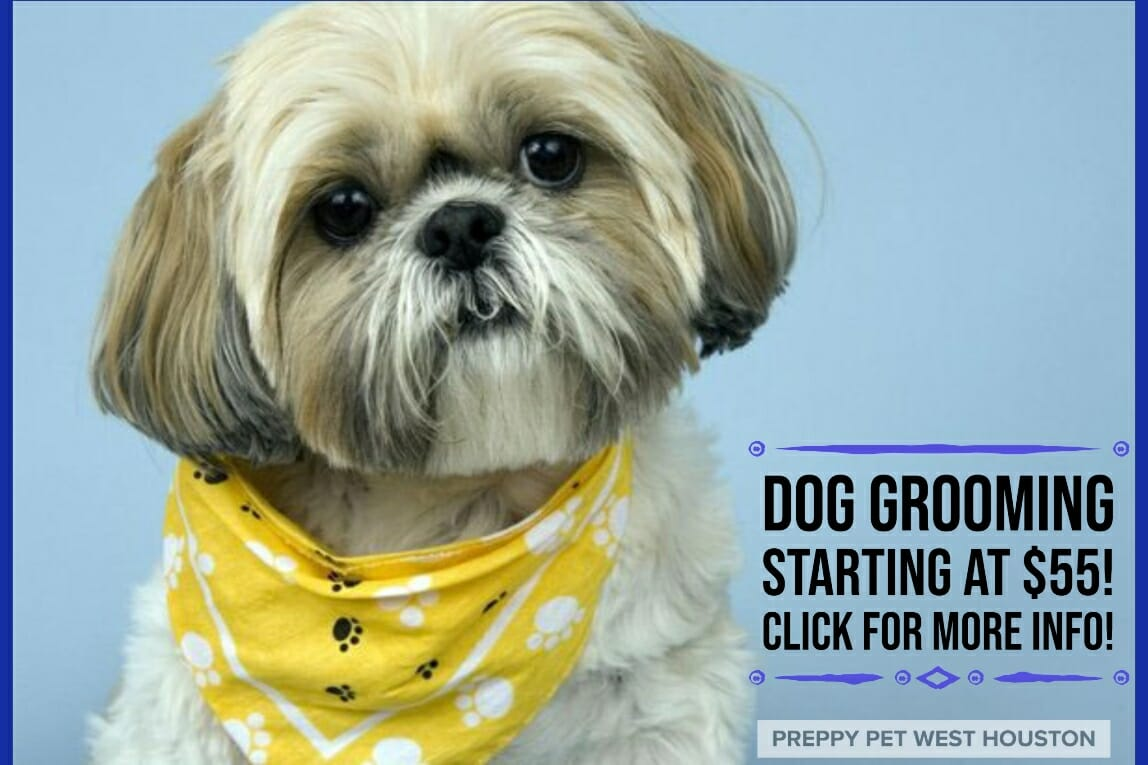 Preppy Pet West Houston Dog Grooming Services