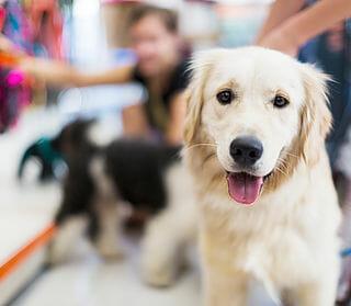Preppy Pet West Houston | Doggy Daycare