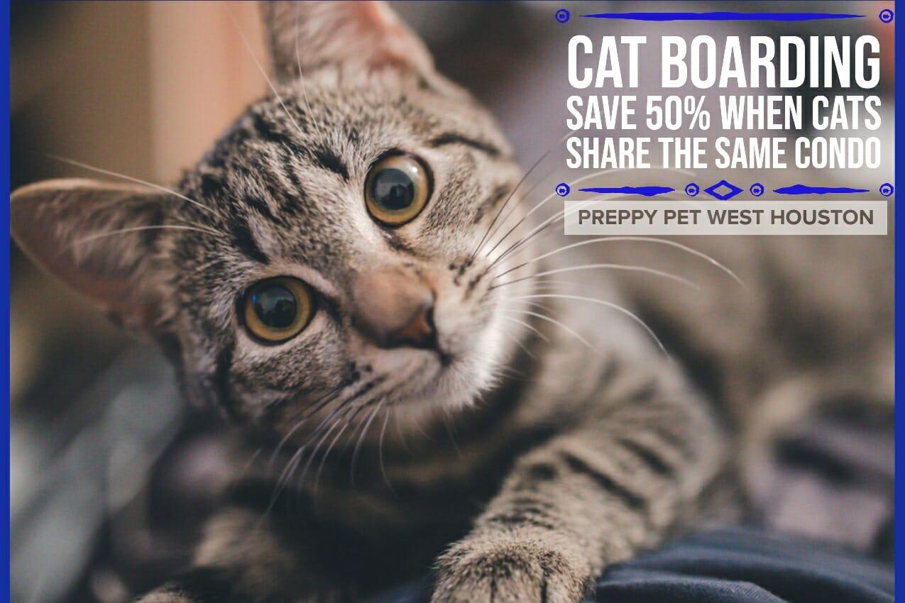 Cat Boarding in Katy & Houston, TX | Preppy Pet West Houston