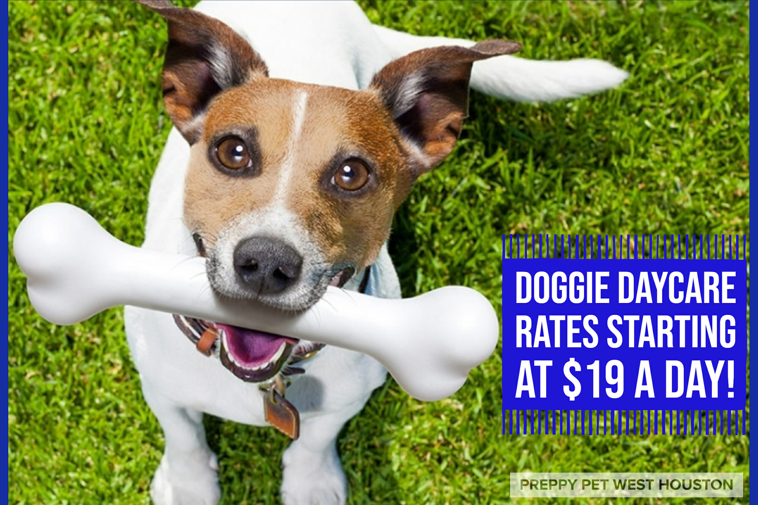 Preppy Pet West Houston | Dog Daycare Rates