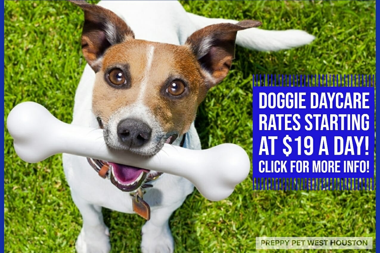 Preppy Pet West Houston | Dog Daycare Prices