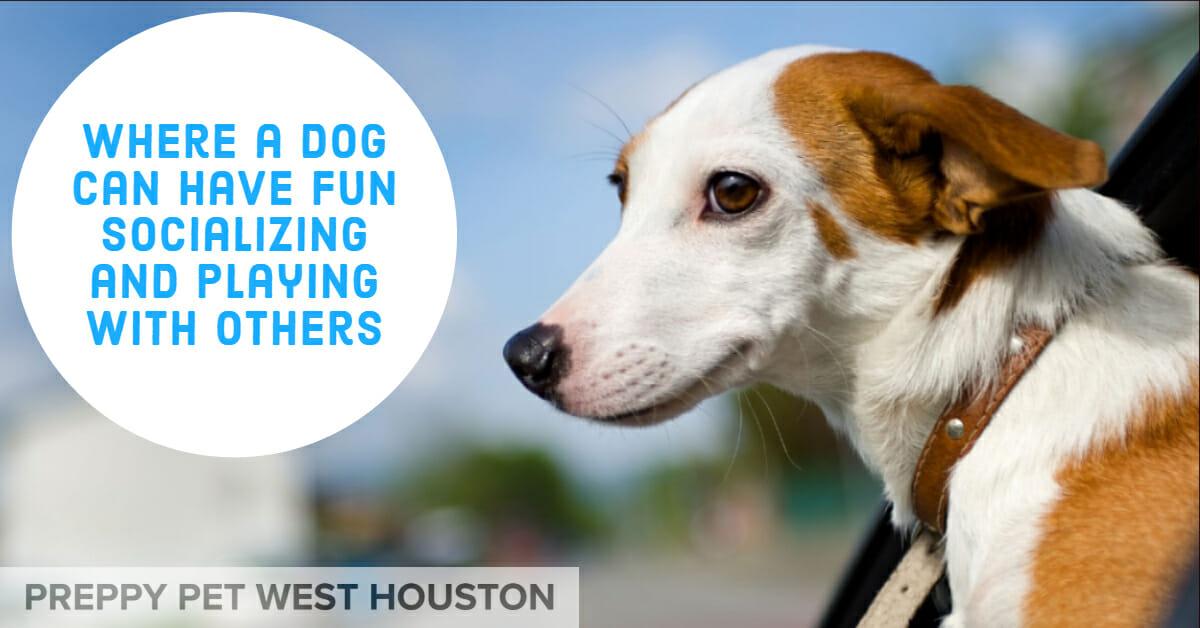Preppy Pet West Houston