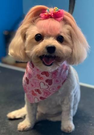 Preppy Pet West Houston | Dog Grooming Creative Coloring