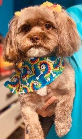 Preppy Pet West Houston | Dog Grooming Small Poodle