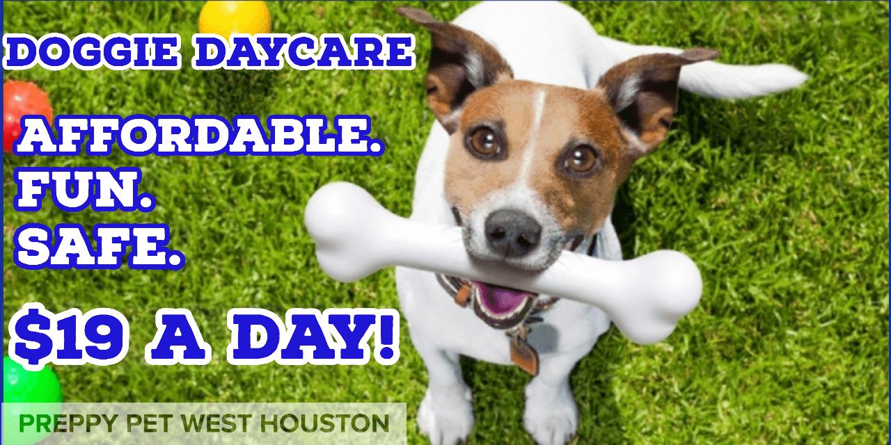 Doggie Daycare Houston, TX | Preppy Pet West Houston
