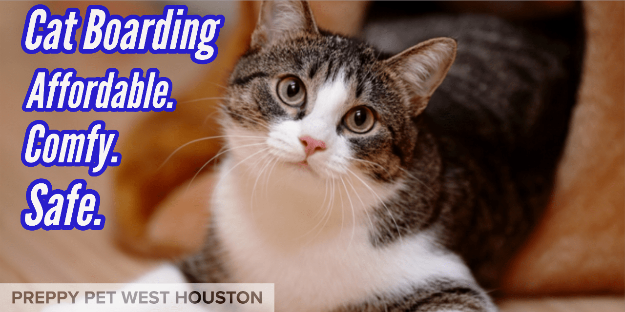 Preppy Pet West Houston | Cat Boarding