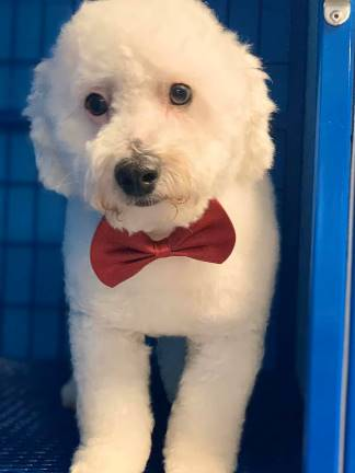 Dog Grooming   Preppy Pet West Houston