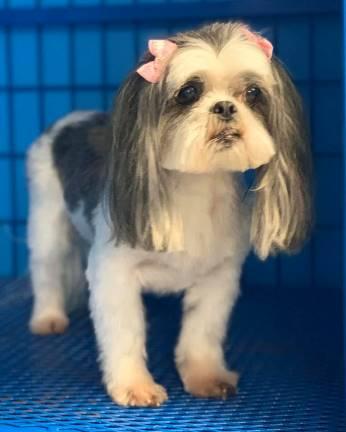 Dog Grooming | Preppy Pet West Houston