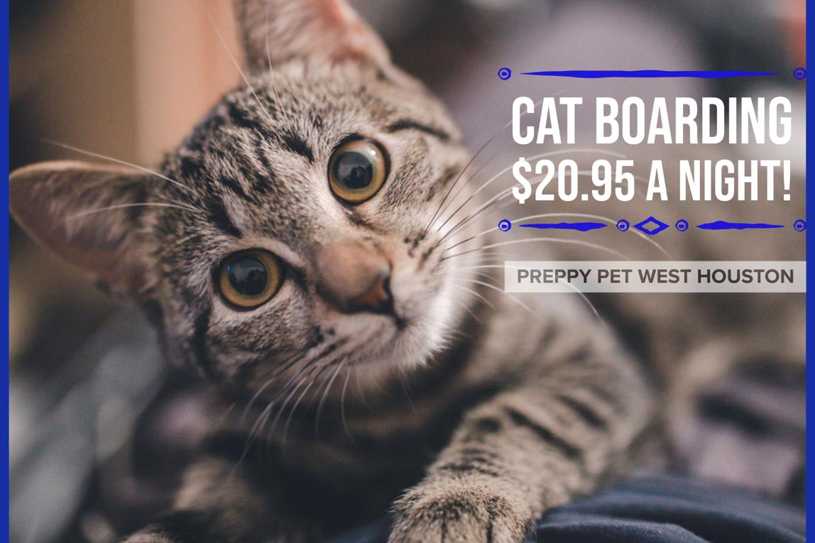 Preppy Pet West Houston | Luxury Cat Boarding in Houston