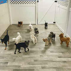 Preppy Pet West Houston | Doggie Daycare Center