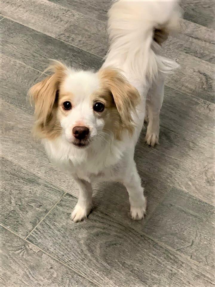 Dog Daycare | Preppy Pet West Houston