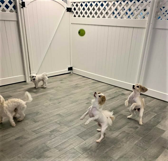 Doggie Daycare | Preppy Pet West Houston