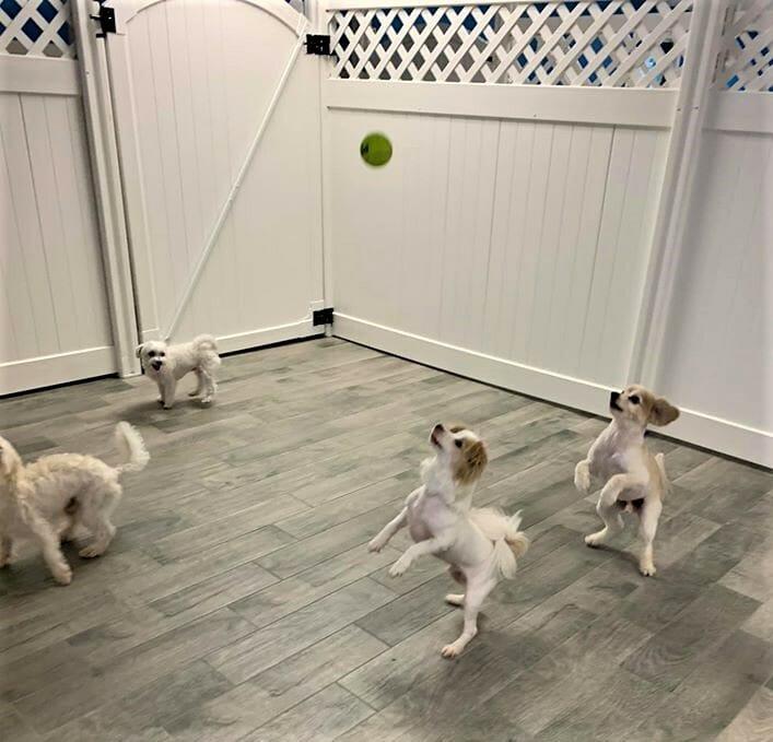 Doggie Daycare | Preppy Pet West Houston