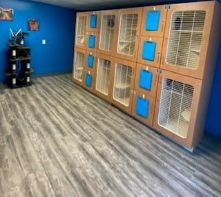 Cat Boarding Room | Preppy Pet West Houston