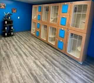 Cat Boarding Room | Preppy Pet West Houston