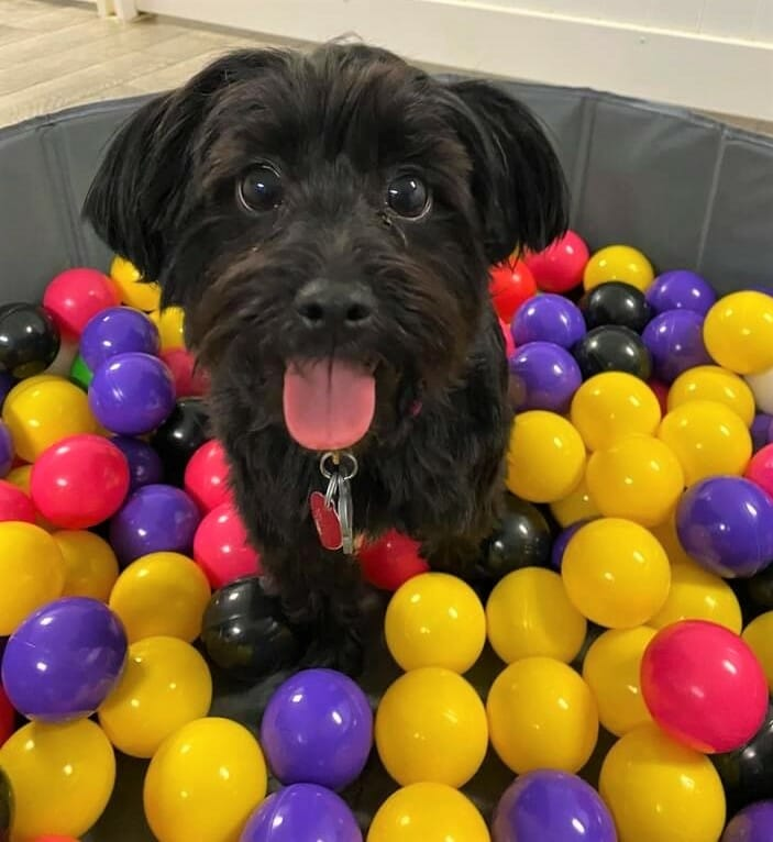 Doggie Daycare Ball Pit | Preppy Pet West Houston