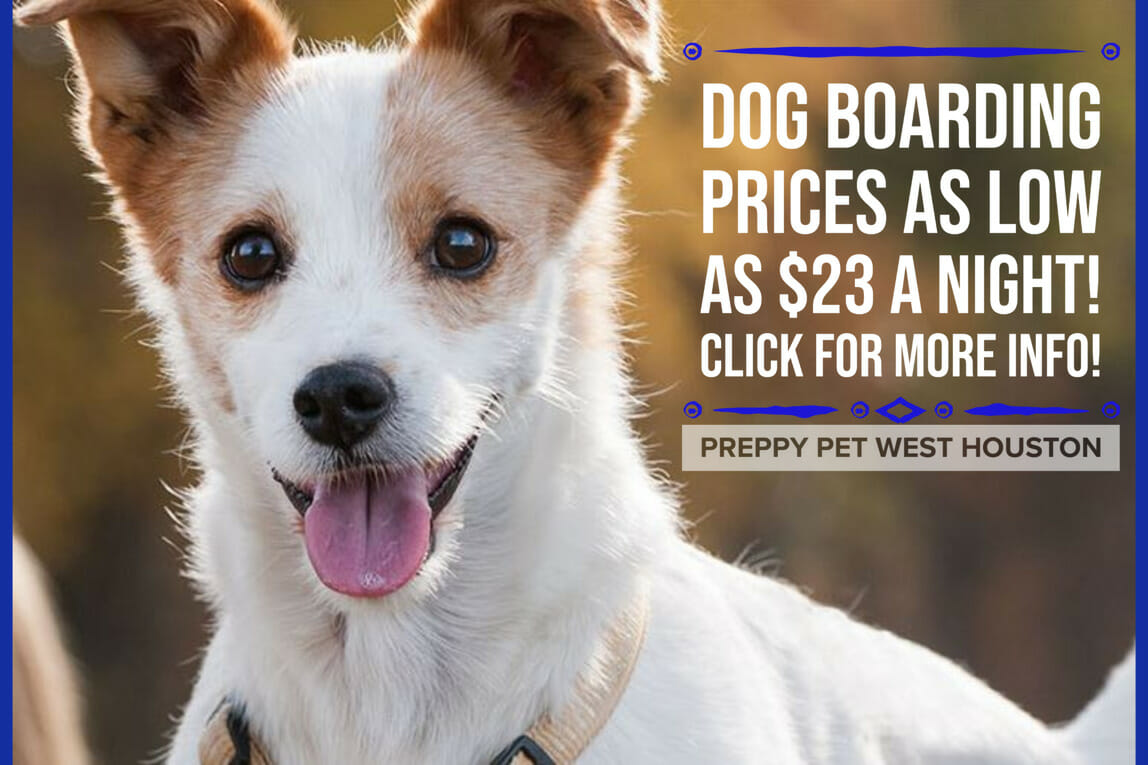 Preppy Pet West Houston | Dog Boarding Prices