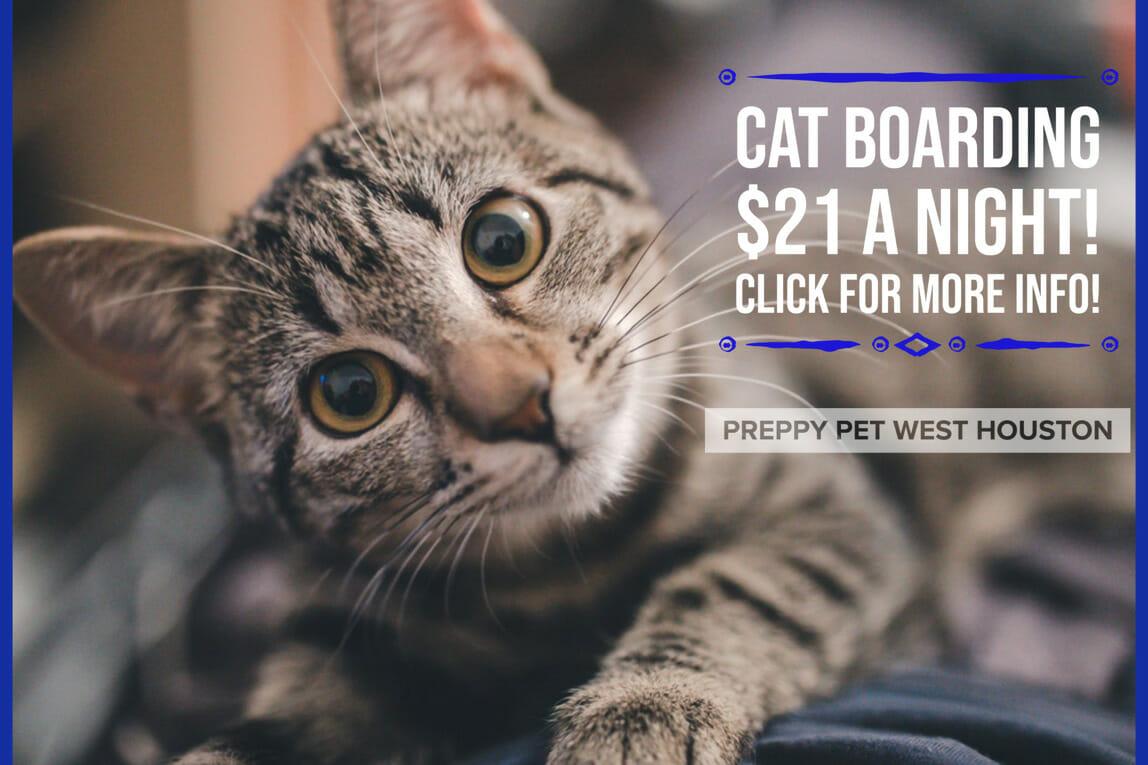 Preppy Pet West Houston | Cat Boarding Prices