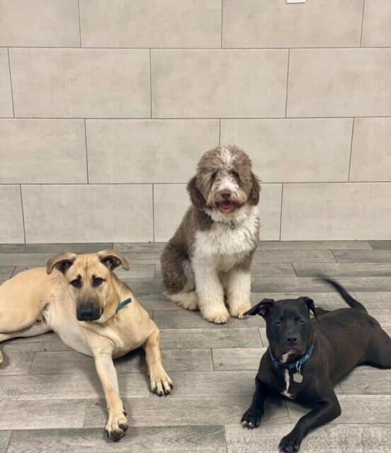 Preppy Pet West Houston Doggie Daycare